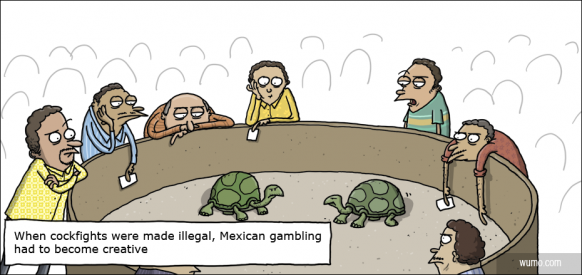 Mexican turtle fighting