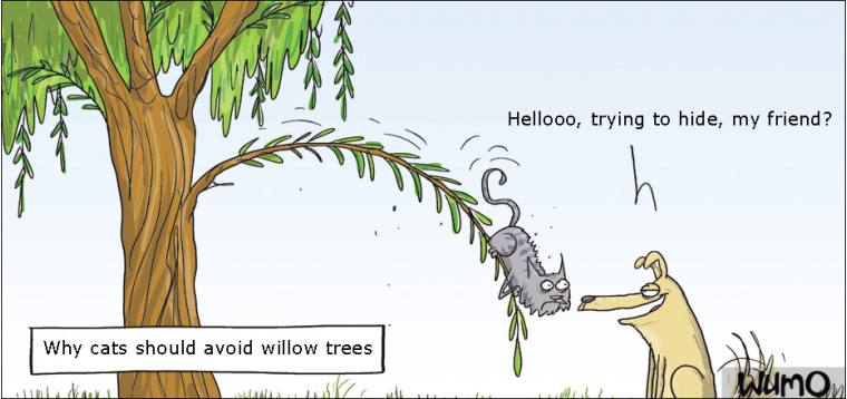 Why cats should avoid willow trees