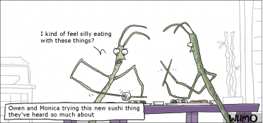 Stick insects eating sushi